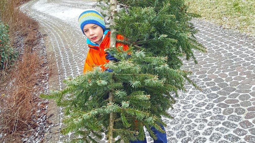 Die letzte Reise der Eichsfelder Weihnachtsbäume