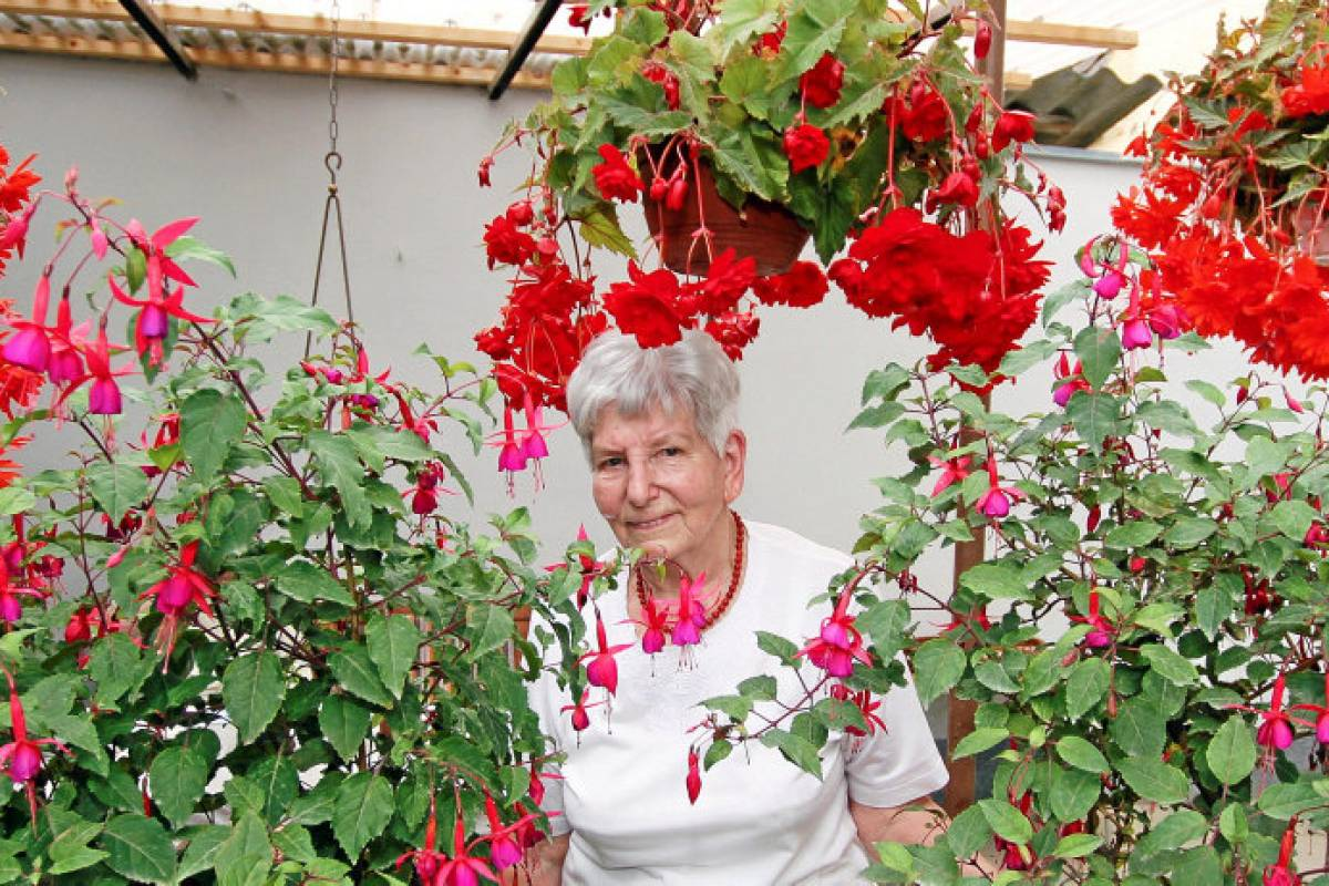 Atemberaubend Blutblume mit 34 Riesenblüten begeistert in Artern   Artern @FI_66