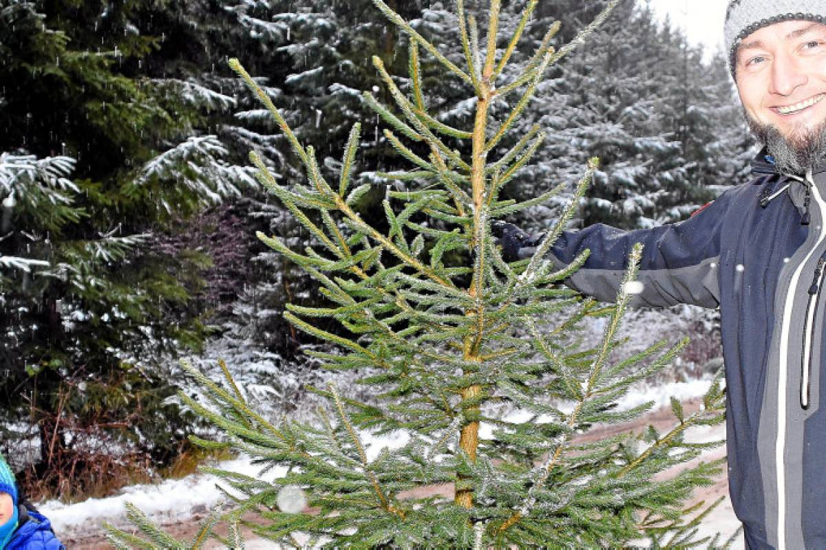 Weihnachtsbaum selber schlagen gotha