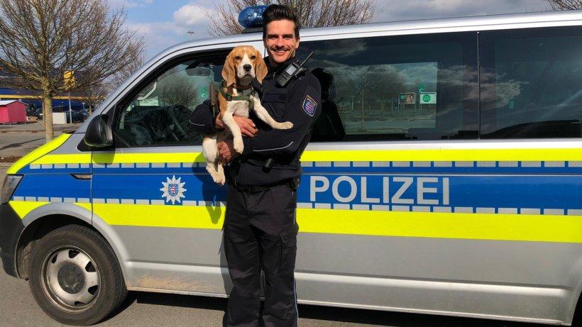 Jagdhund bei Prüfung entführt – Polizei findet ihn in fremdem Auto