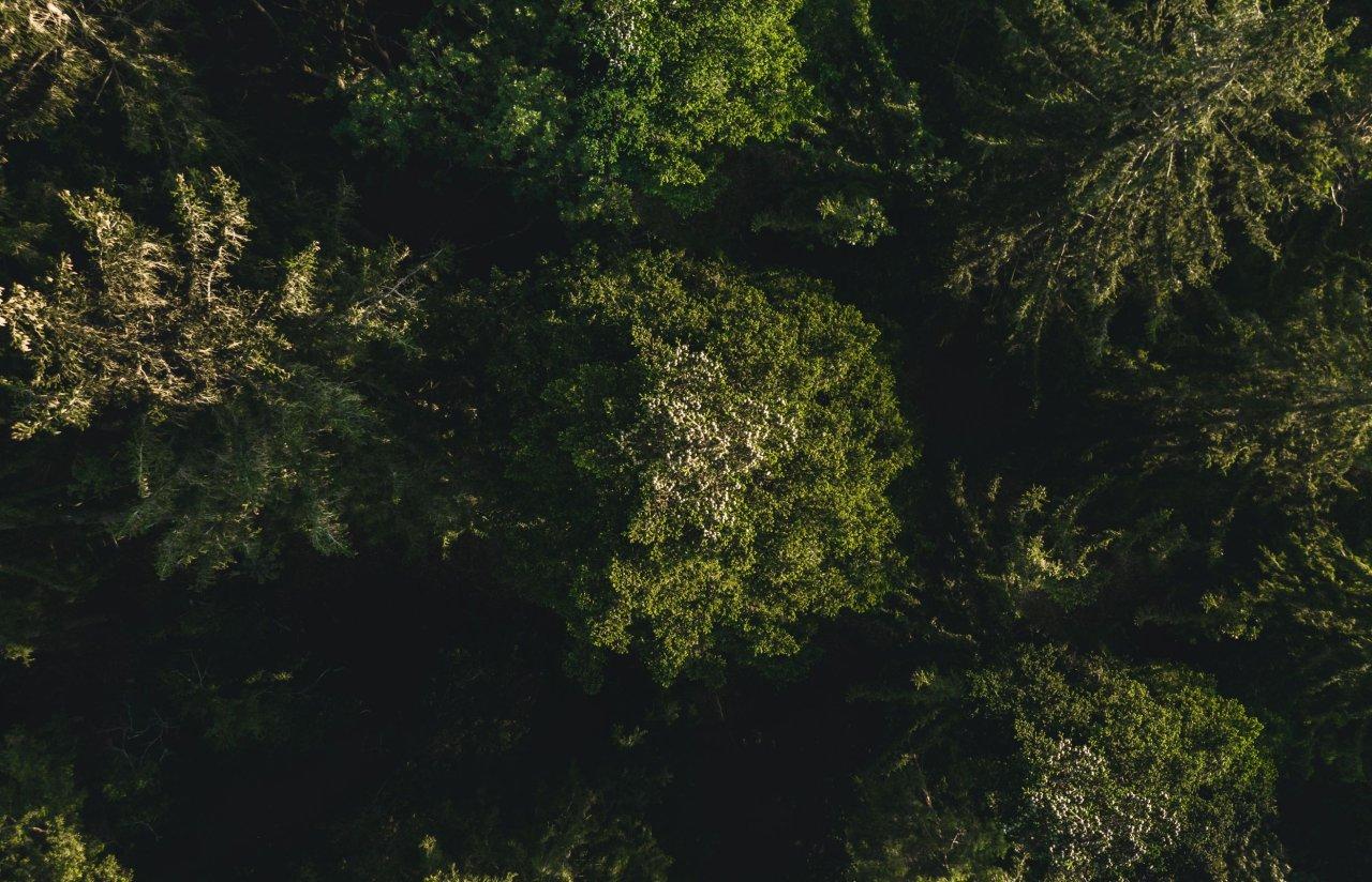 """Die Sonderausstellung """"Leben in der Baumkrone"""" auf der Heidecksburg und die korrespondierende Sonderschau """"Im Garten der Mönche"""" im Amtshaus Paulinzella zeigen die Vielfalt der Natur."""