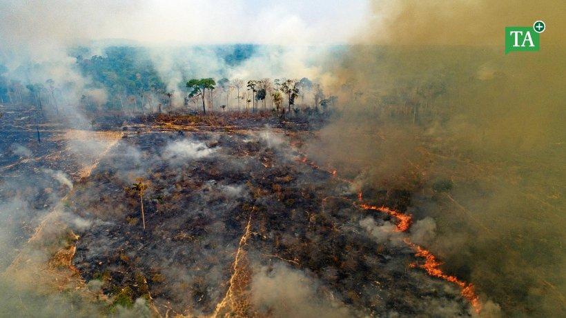 Feuer Amazonas